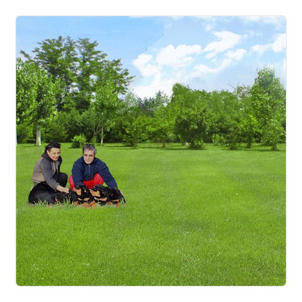 foto cuccioli allevamento cuccioli